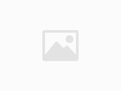 The Wildings Campsite